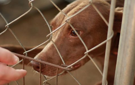 Pet Adoption: Erath County Humane Society