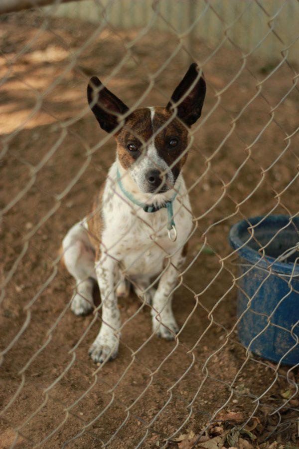 Pet+Adoption%3A+Erath+County+Humane+Society